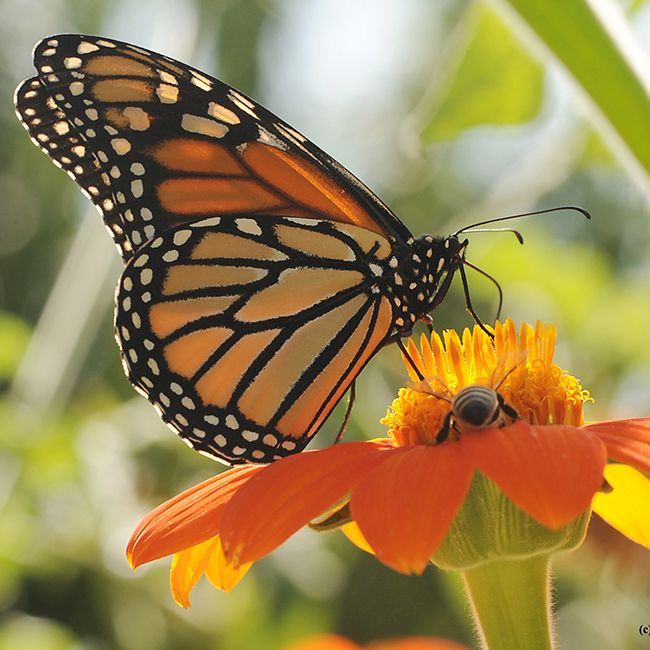 How Many Pollinators Do You See There Are Many Different Types Of - What do the different types of maps tell us