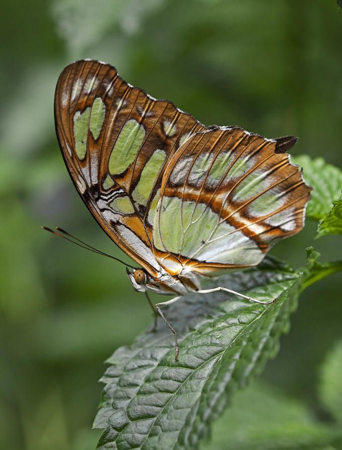 Butterfly 2 Photo By Photographer Christopher Grant Butterfly Green Butterfly Beautiful Butterflies