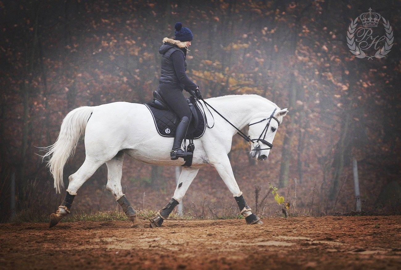 Komplet Pionier Horse Horses Animals