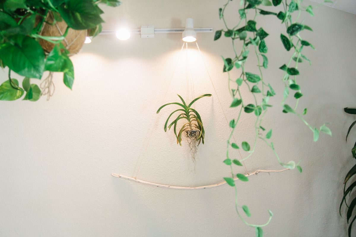 on the blog: hanging plants and orchids