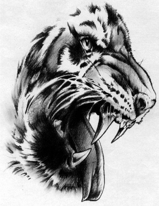 Tiger Malvorlage Kostenlos Tiger Ausmalbilder 0