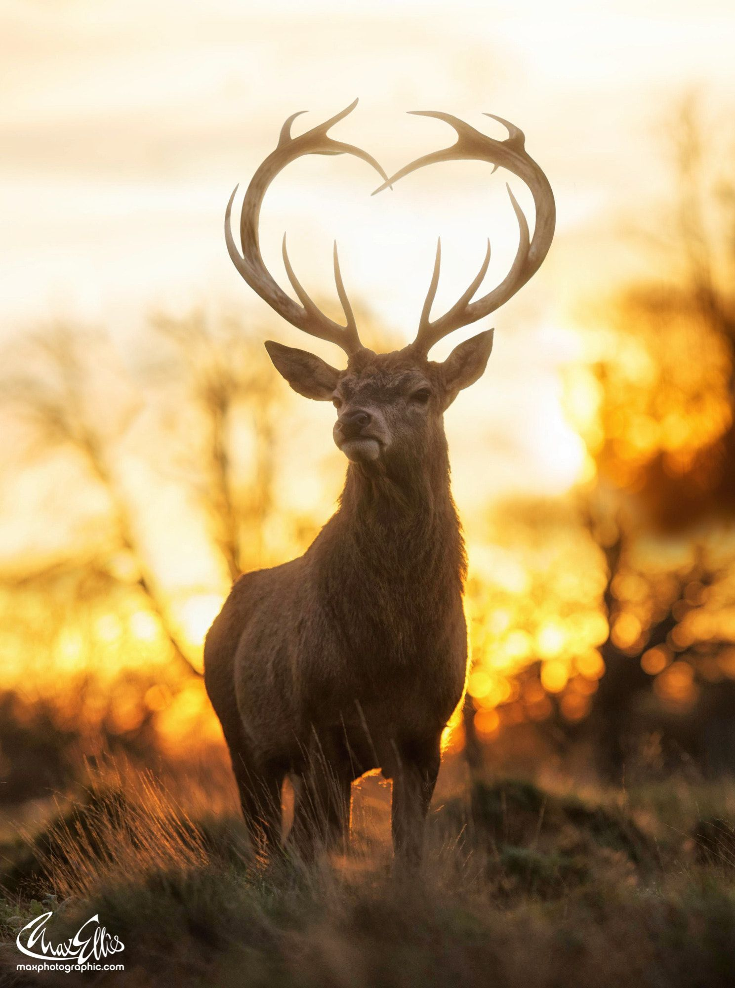 Love You Deer  A rare sighting of the Loveyoudeer, only seen on Valentines day  If you don't believe in them one of them dies! is part of Animals -