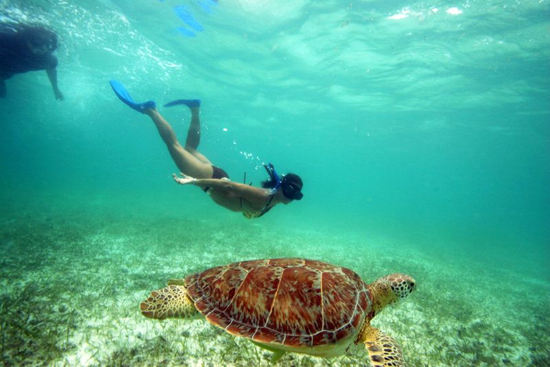 Snorkling While Swimming With Turtles in Akumal, Quintana Roo