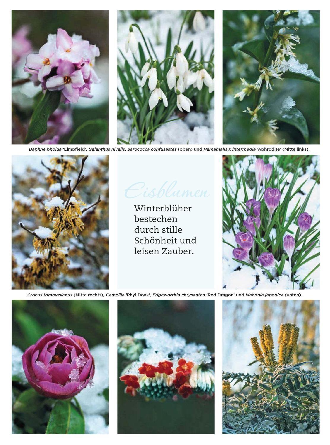 #ClippedOnIssuu from Garden style magazin 2014 winter