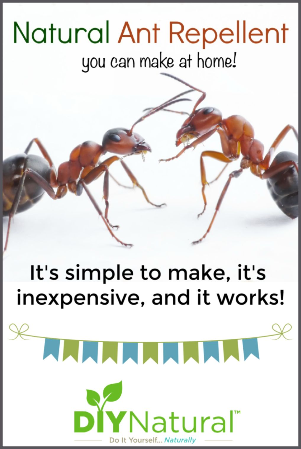 Natural Ant Repellent Spray A Simple And Safe Spray That Really Works Ant Repellent Ants Natural Ant Repellant