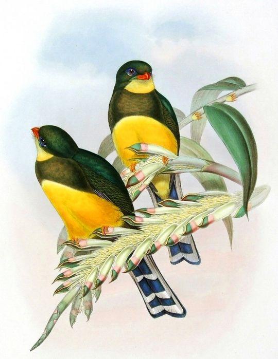 винтажные птицы. картинки для декупажа (16) (540x700 ...