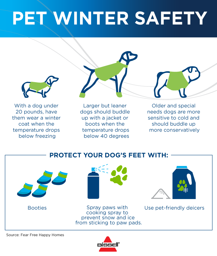 Your Guide To Winter Pet Safety Wintersafety Petsafety Dogs