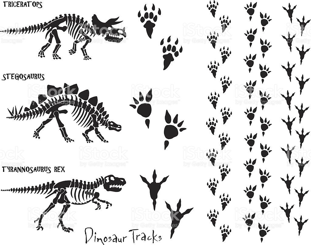 Dinosaur Skeletons And Foot Prints All Elements Are