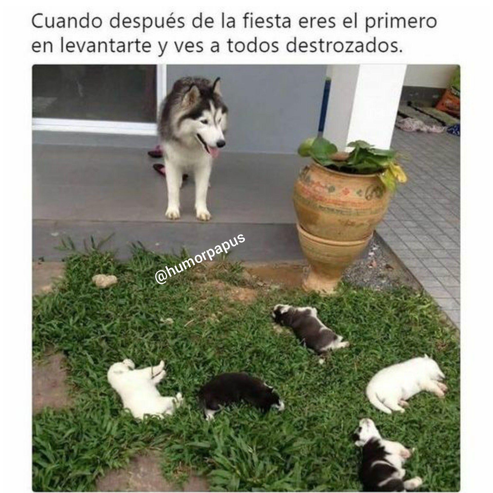 Pin De Caro En Imagenes De Memes En Espanol Chistes De Perros Imagenes Chistosas Mascotas Frases