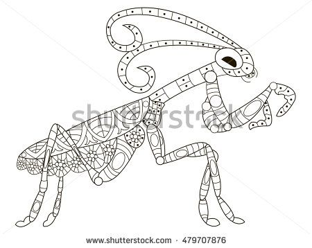 Mantis Coloring Pet Adult Vector Illustration Anti Stress For Adults Zentangle Style