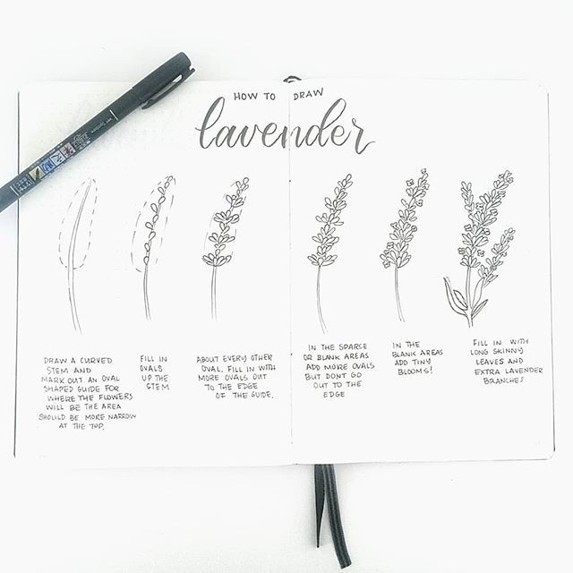 HOW TO DRAW LAVENDER: Thanks To Everyone Who Requested