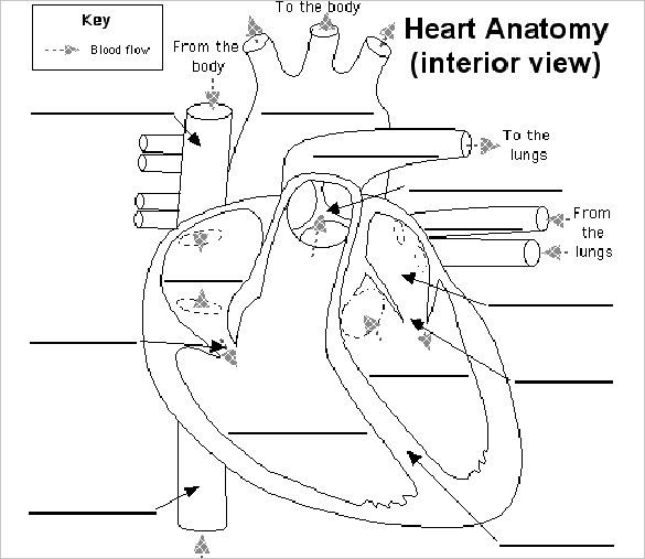Labeling Diagrams Of the Heart Inspirational Heart Diagram ...
