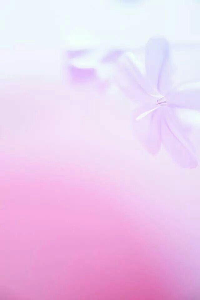 Fleurs Abstrait Fond Ecran Fond Ecran Rose