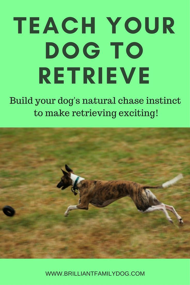 Teach Your Dog To Fetch Retrieve Find And Bring Things Back