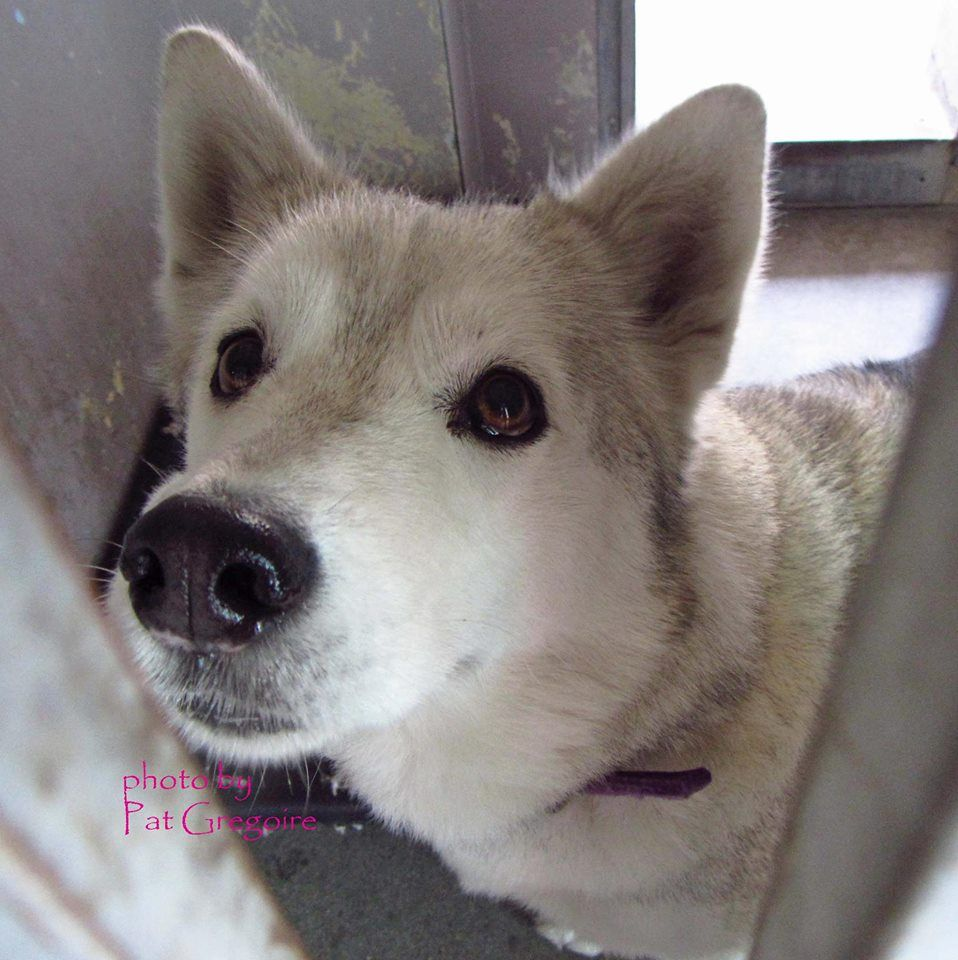 A4766386 my name is Grace. I am a very sweet 2 yr old