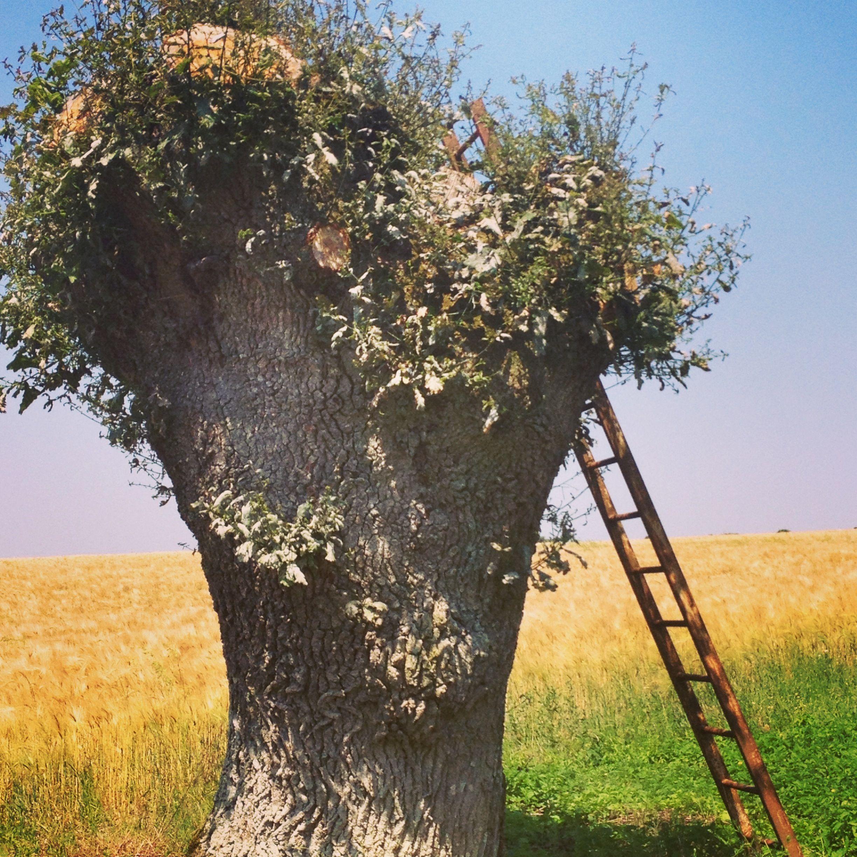L'arbre sans branches ... #berry #campagne #france