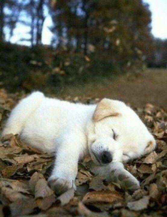 Sleepy tired.