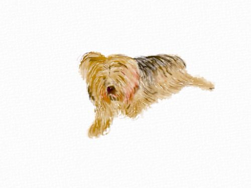 carolef45:  Made with Auryn Ink  Yorkie   I think he needs a...