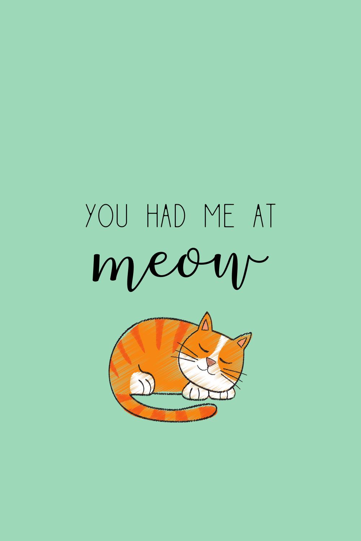 Funny Cat Quotes Short
