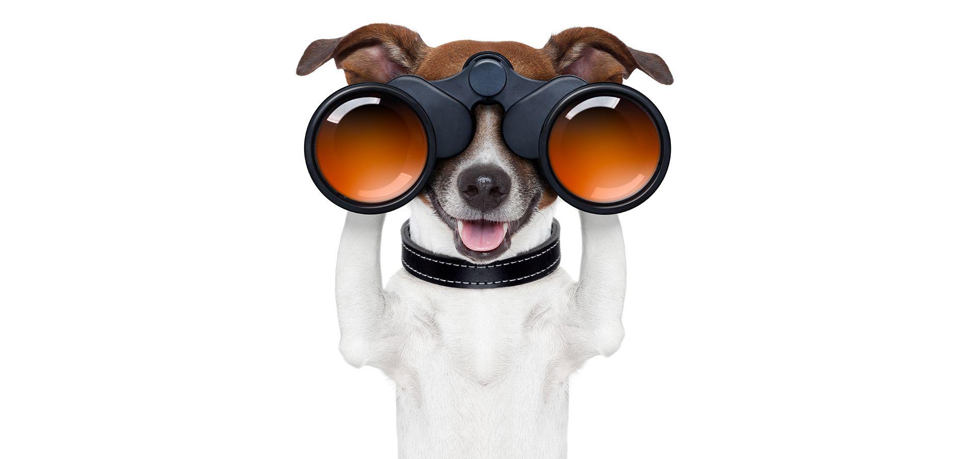 Compare Pet Insurance Pet insurance reviews, Best pet