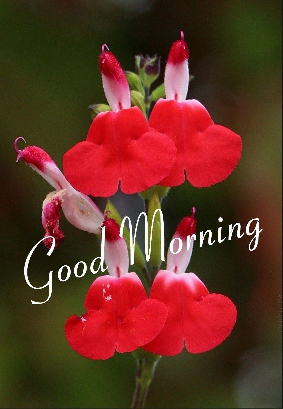 Pin By Lara On Morning Wishes Good Morning Beautiful Pictures Good Morning Wishes Good Morning Beautiful
