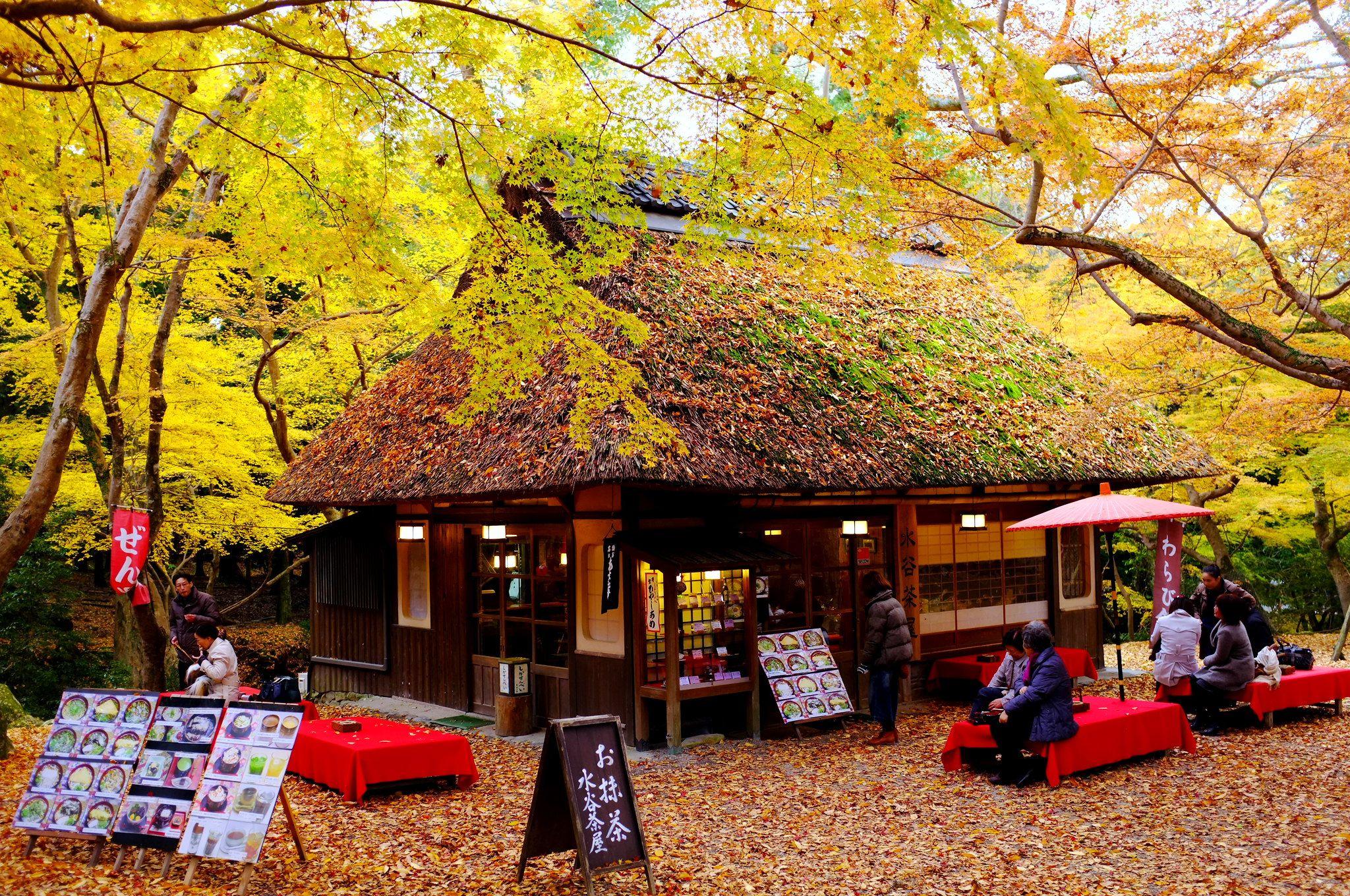 水谷茶屋   落ち葉が積もった茅葺屋根、赤い床と野点傘、 絵のように美しい景色が眺められる。   ( ´_ゝ`) Sho   Flickr