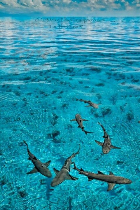 Sharks in open water. Colorado Springs Pediatric Dentistry | #ColoradoSprings | #CO | http://www.cspediatricdentistry.com/