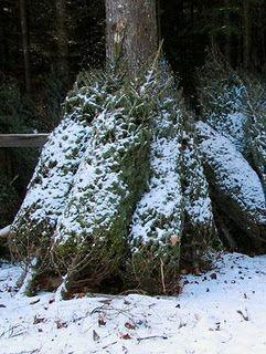 Petit Design Co Diy Christmas Tree Preservative Christmas Tree Preservative Live Christmas Trees Christmas Tree Water