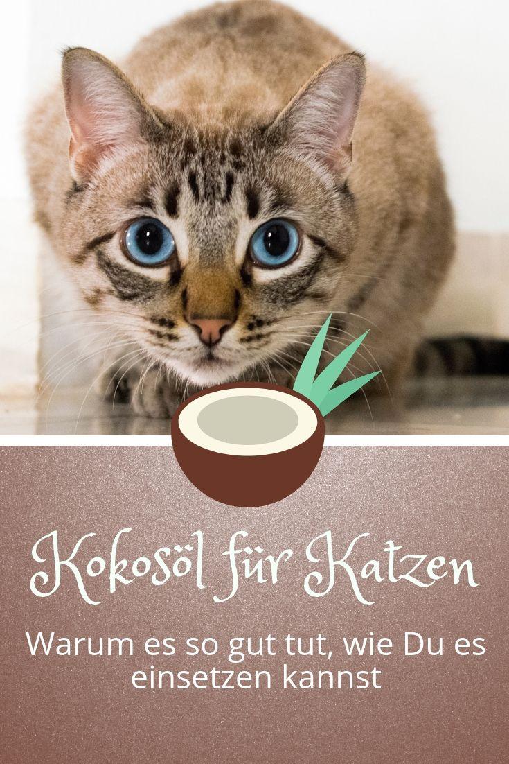 Immer mehr Katzenhalter schwören auf die heilsame Wirkung von Kokosöl. Als natürliches Heilmittel und Kosmetikum hat sich das Öl mittlerweile in vielen Haushalten etabliert. Hier liest Du, wofür Du es bei deiner Katze einsetzen kannst