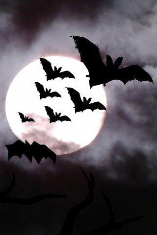 Moon Clouds And Bats Halloween Wallpaper Backgrounds Halloween Wallpaper Iphone Halloween Illustration