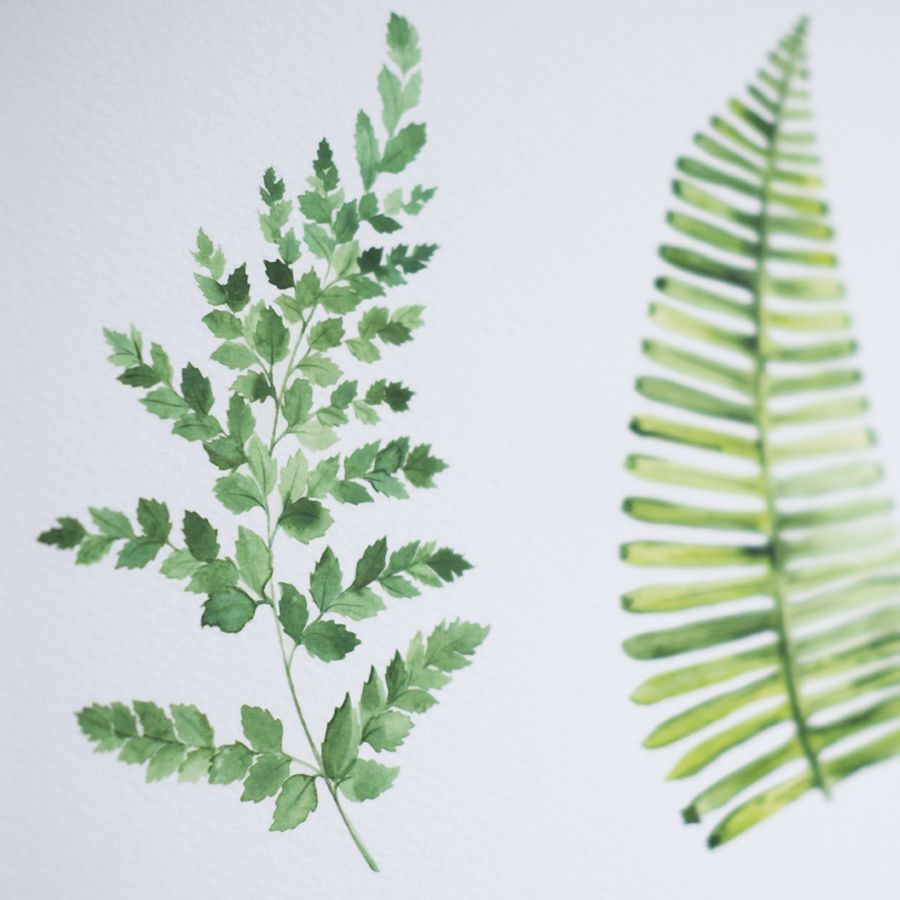 My botanical watercolour course aims to capture the delicate beauty ...