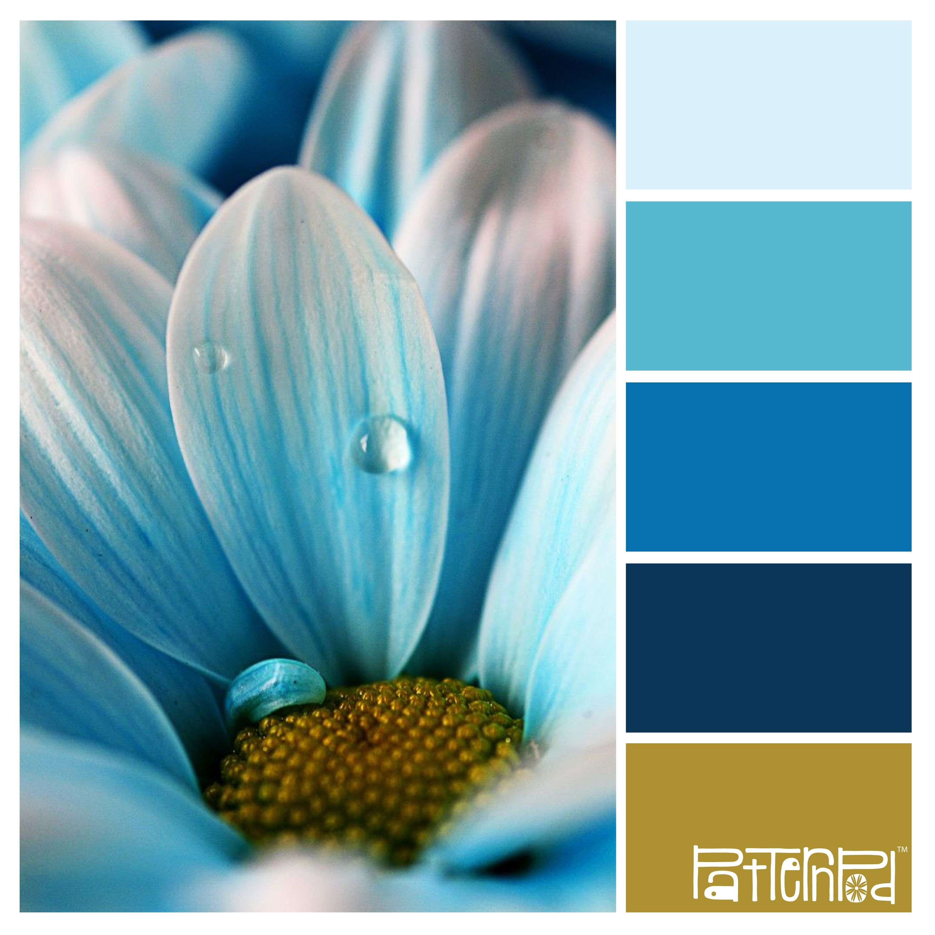 What type of flower are you cerulean color inspiration and color what type of flower are you izmirmasajfo Images