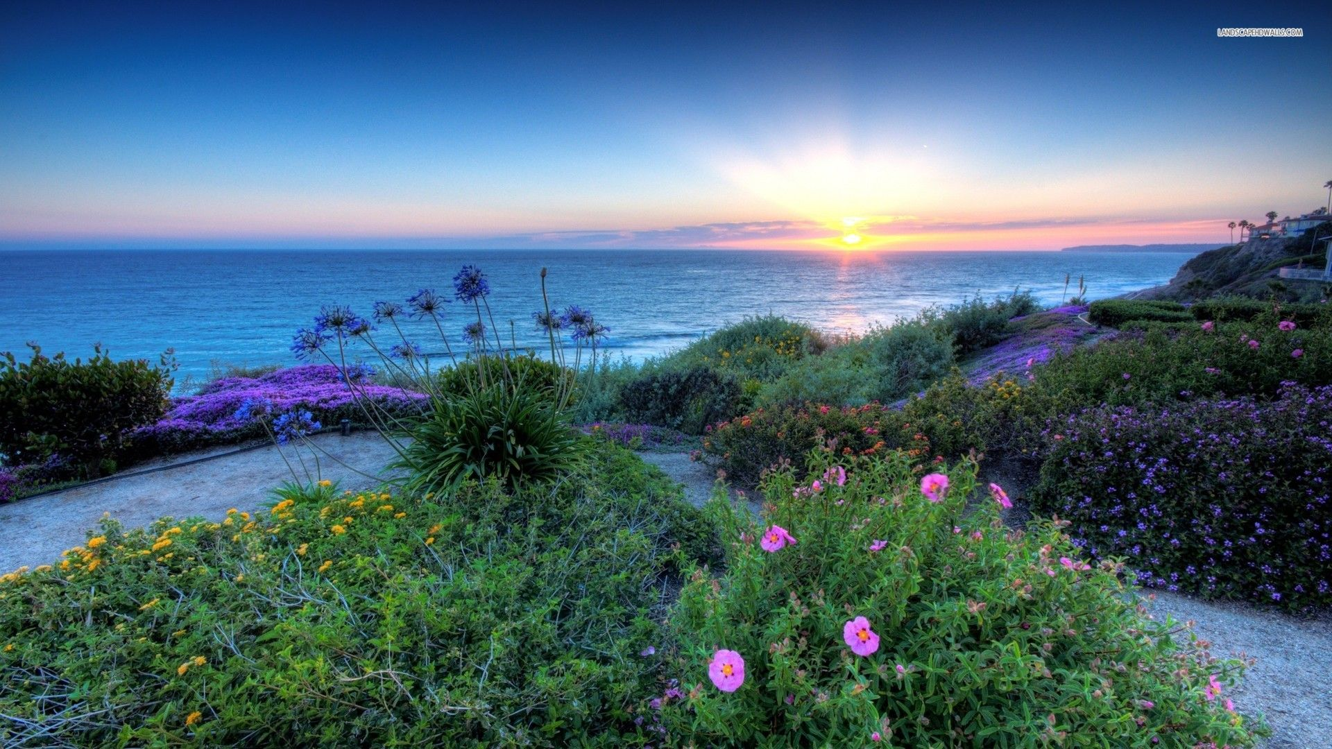 Beach Flower | Flowers on the Beach at Sunrise wallpaper | oceanview ...