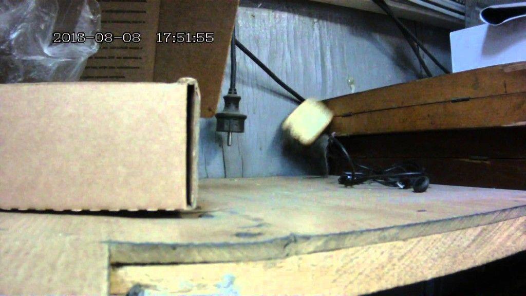 Rato 'persistente' faz acrobacias para conseguir comer uma bolacha
