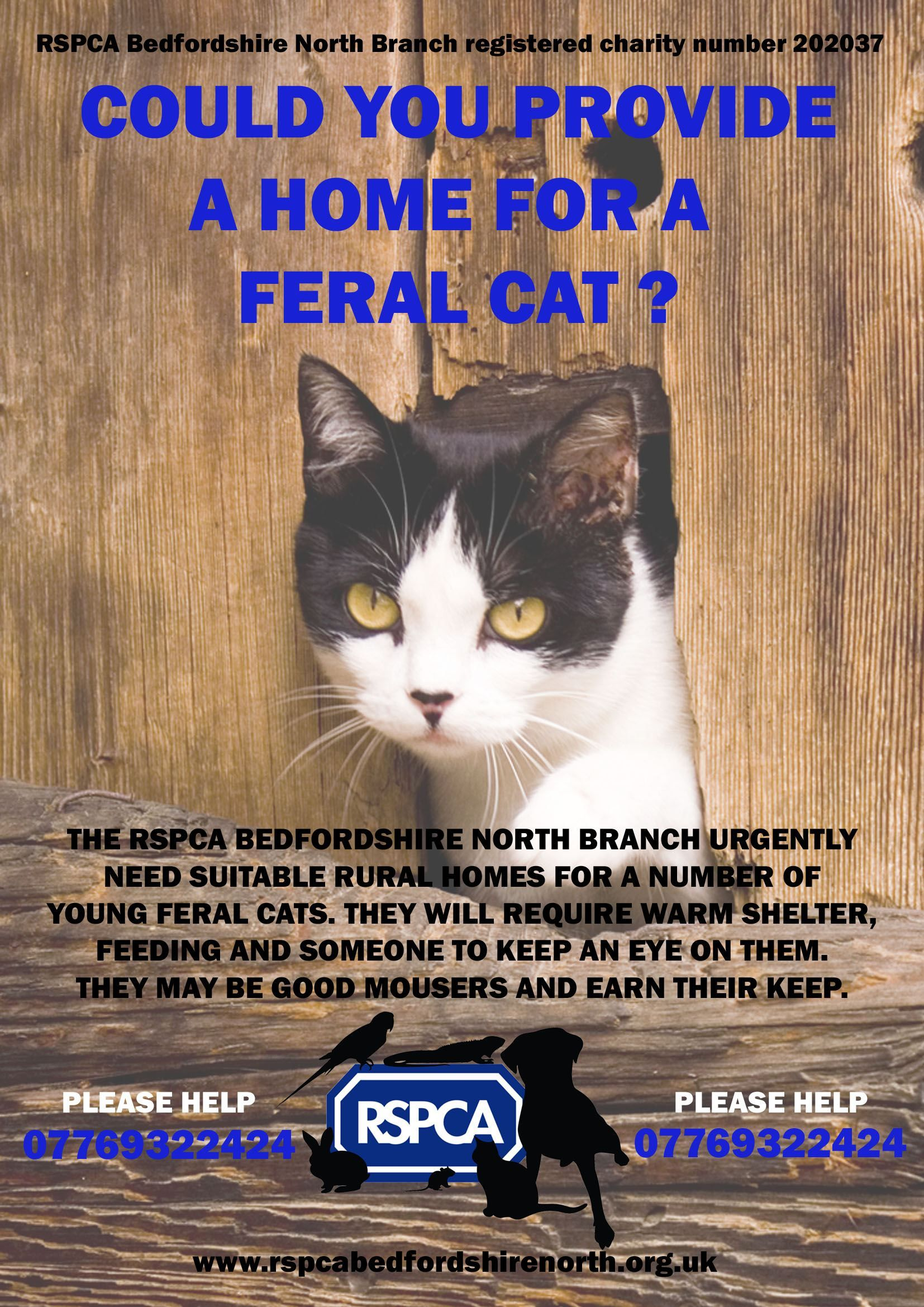 Http Www Rspca Bedfordshirenorth Org Uk Rspca Images Rspca News Feral Cats Poster Jpg Feral Cats Cat Posters Cats