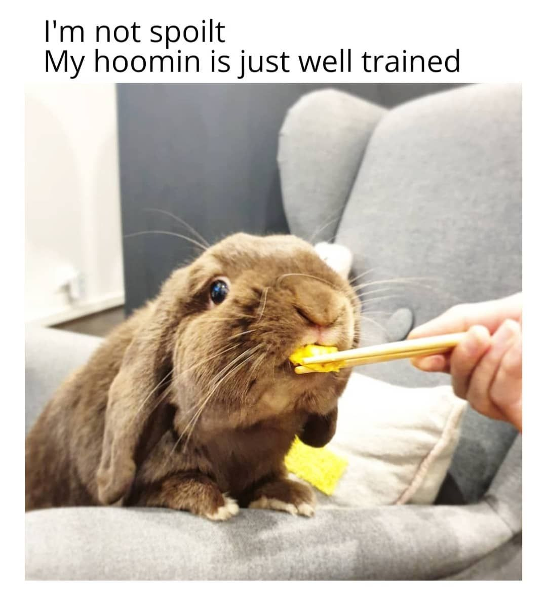 8 Things You Do That Upsets Your Bunny   Cute funny animals ...