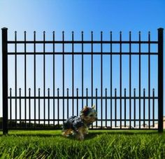 Iron Fence With Puppy Panels Perfect For Keeping Small Dogs In Your