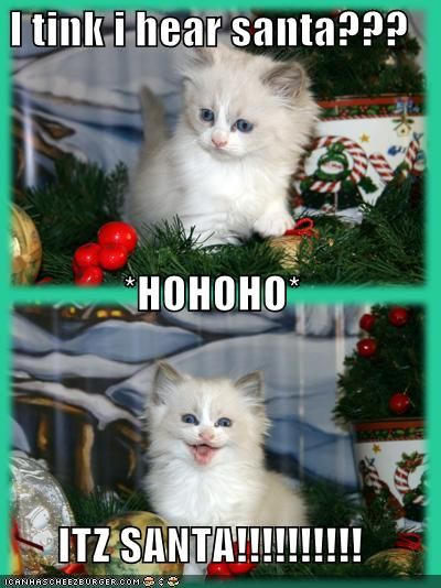 Remarkable 1000 Images About Cute Stuff On Pinterest Christmas Cats Easy Diy Christmas Decorations Tissureus