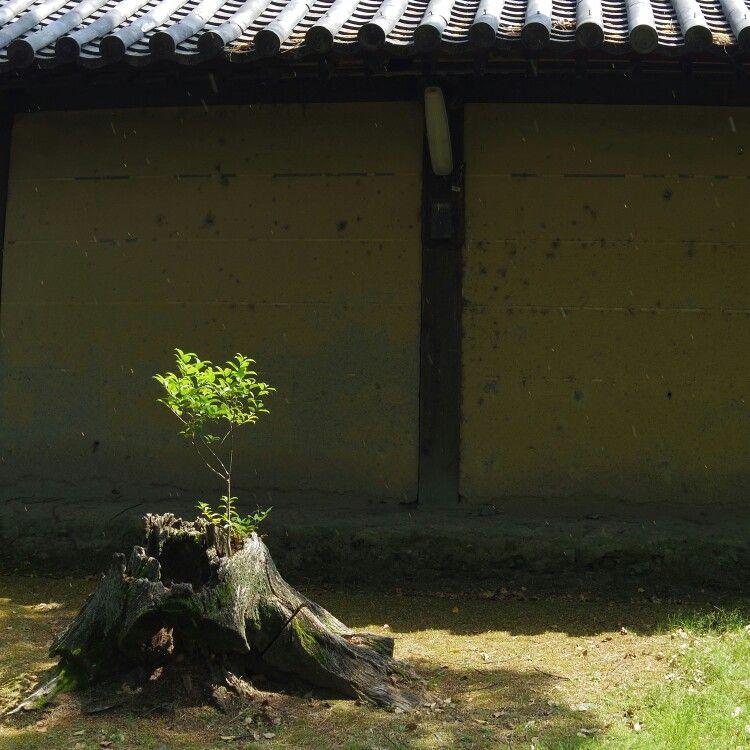 東寺 toji temple in kyoto.