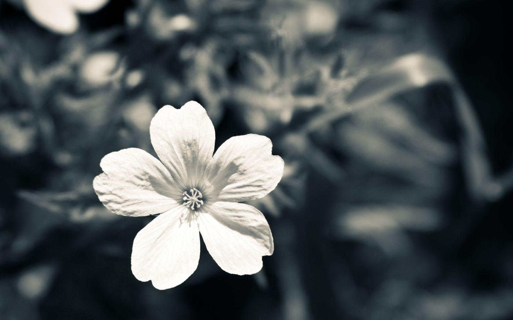 White Among Black S My Style Pinterest Dark Star