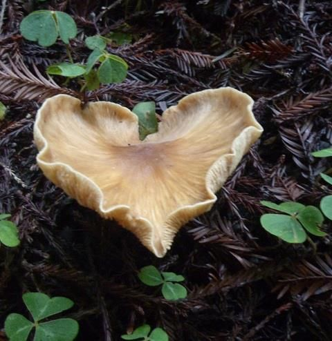 Nature Is Full Of Hearts We Just Have To Look Heart And Voice Voice Your Heart And Learn How To Speak Your Stuffed Mushrooms Heart In Nature Heart Shapes