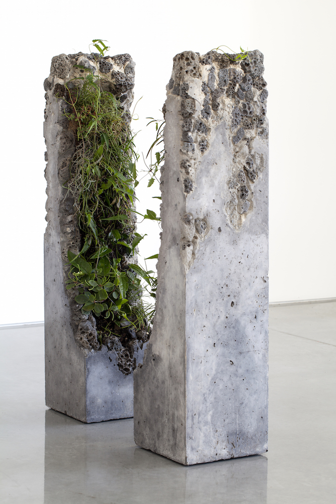 Jamie North Fills Concrete With Australian Plants - IGNANT
