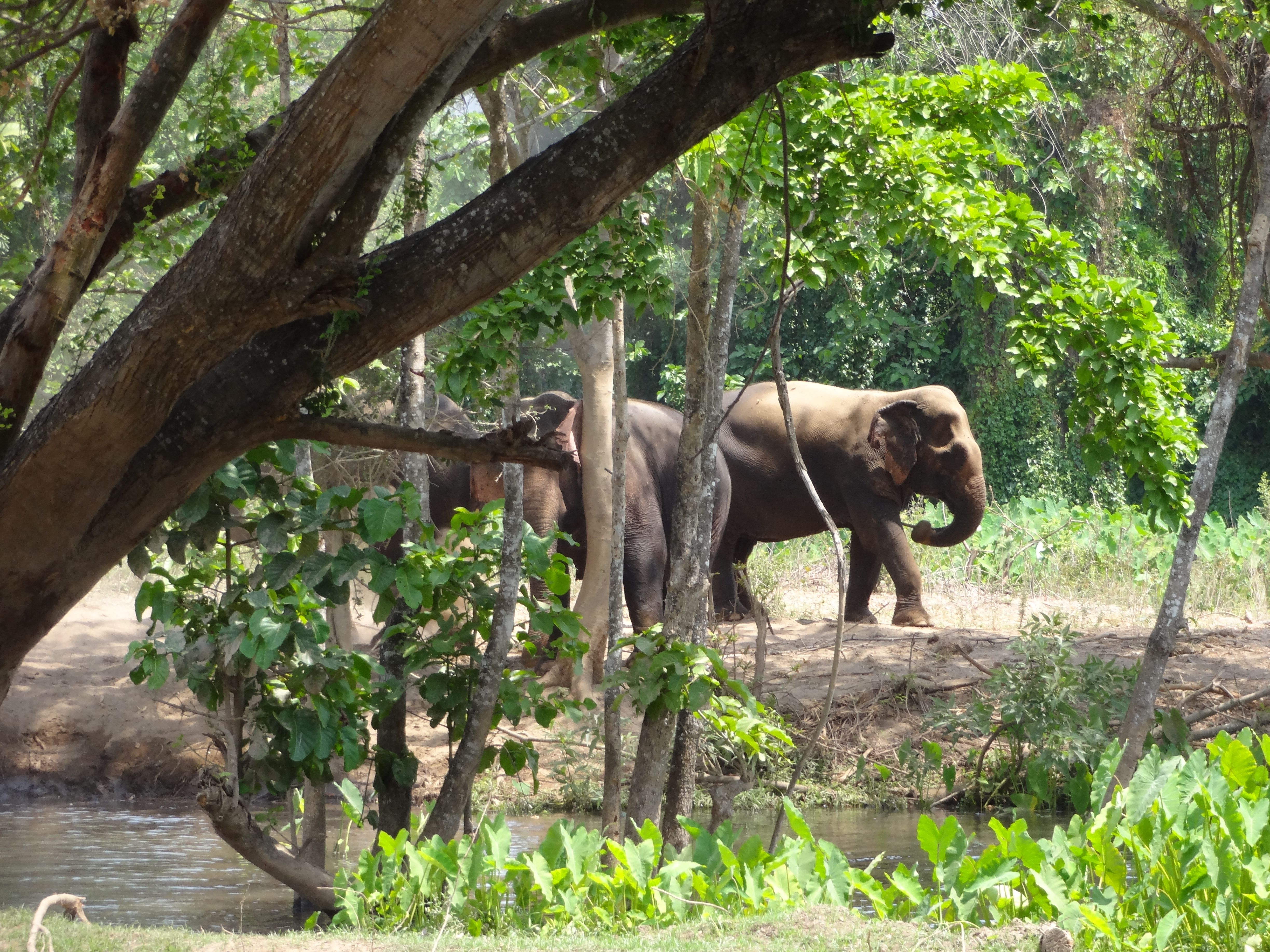 Elephant's World sanctuary! A wonderful place to visit during a trip with Volunteer Voyages!