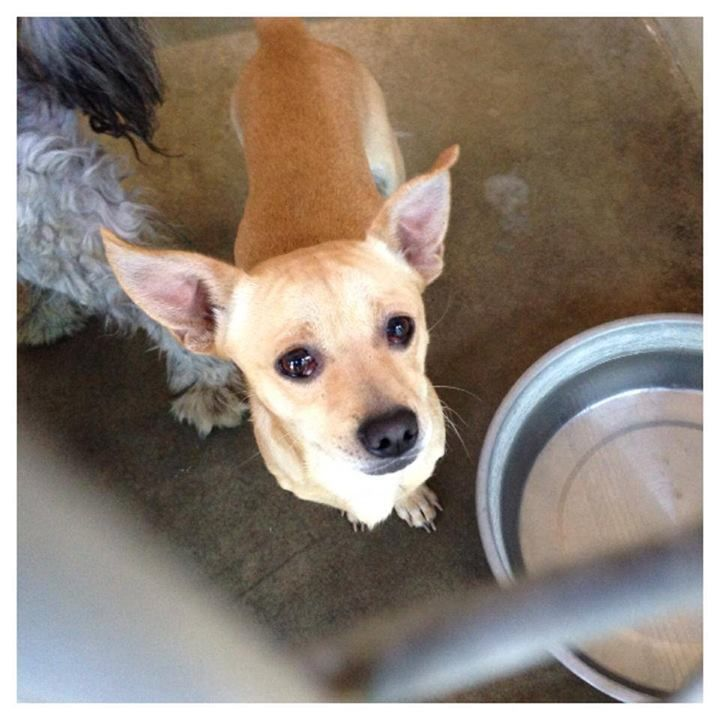 In Danger Past Due Timmy Is Just So Happy To Have Company He Cries When You Leave Not A Lot Just A Low Please Don T Go Cry Dog Adoption