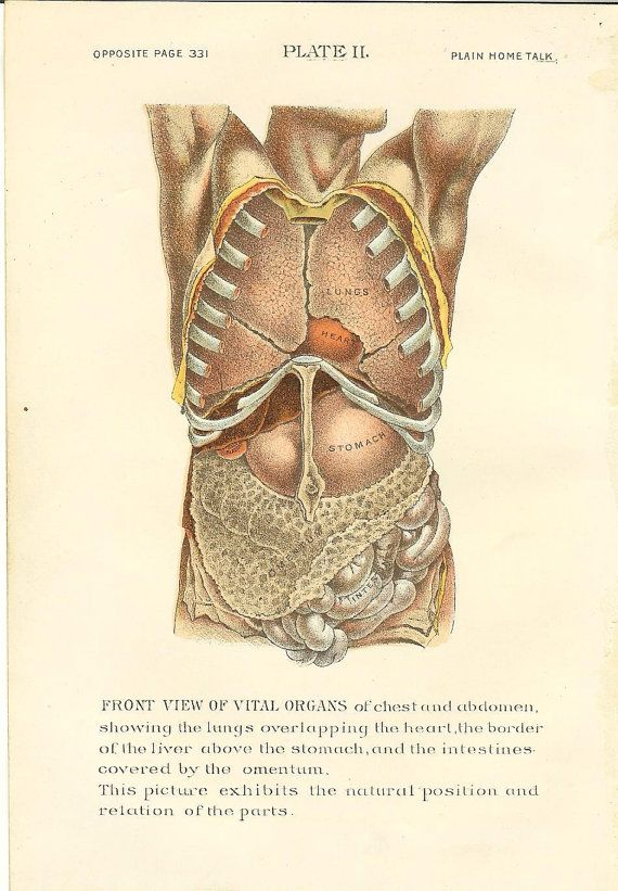 1896 Antique Medical / Human Anatomy Print Organs Of Chest / Abdomen ...