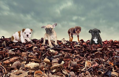 Sign the petition to #ScrapPuppyTrade Animals Petitions - business petition