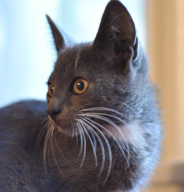 Don Drysdale Featured Feline On Goodmorningkitten Com Was Adopted With His Sister Sandi Koufax Yesterday They Re Going To Make Their New Cat Mo Don Drysdale