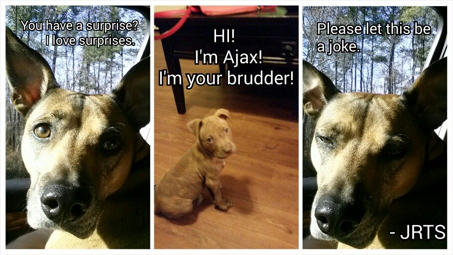 It S True Ajax Rome Is Here To Stay Welcome To The Pack Little