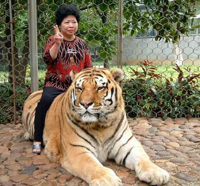 Woman On Tiger. That's so awesome.