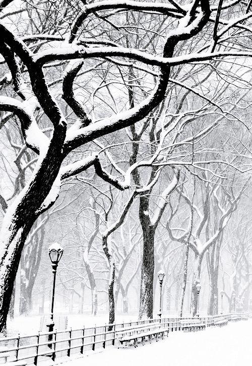 Monster - Winter Wonderland~